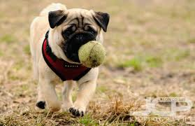 Take Your Ball