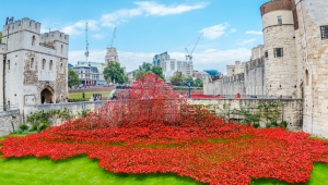 wave-poppies-london