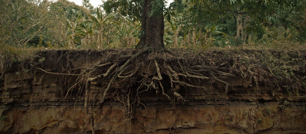 Tree_roots_cross_section-e1351581137309-1024x451