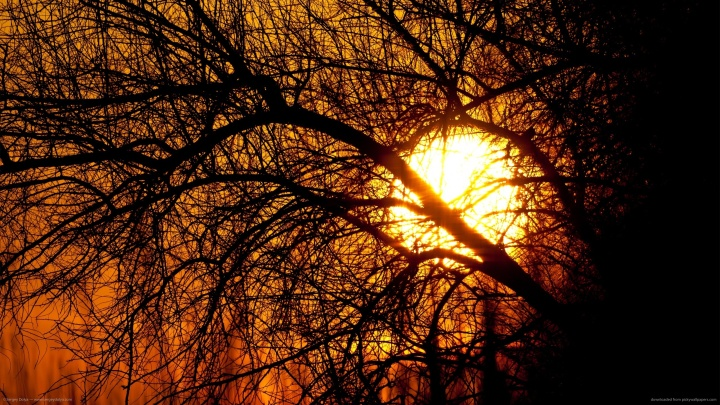 sun-is-hiding-behind-the-trees