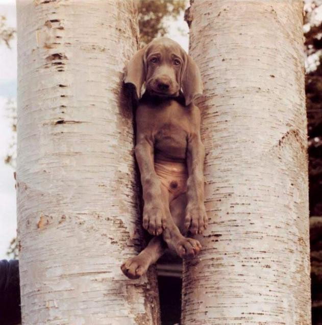 dog-stuck