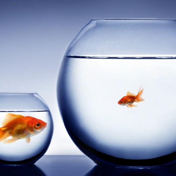 big-fish-small-pond-shutterstock-8451121-big-fish-small-pond-20151229064458-56822bea09d05-800x800