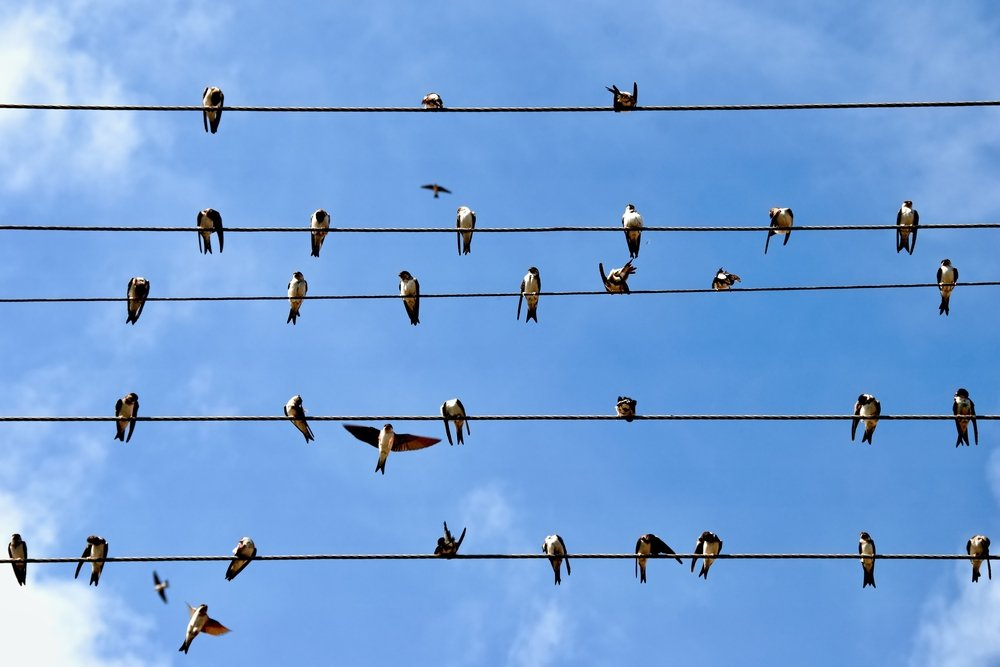 curiosity how can bird s feet stay on electrical wires rochemamabolo rh rochemamabolo wordpress com Types of Electrical Wire Types of Electrical Wire