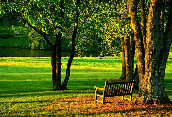 Meadowlark-Landscapes-Nature-Bench-Park-Peaceful-F-3387