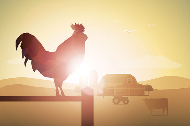 morning-rooster.thinkstock