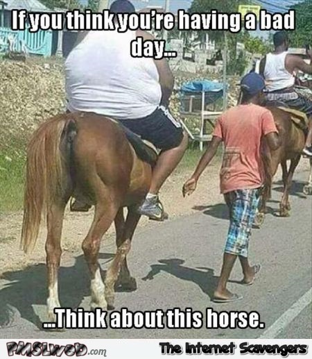 15-if-you-think-you-re-having-a-bad-day-horse-meme