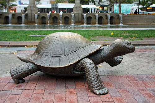 be-the-tortoise-slow-and-sleady-always-wins-out-in-fitness