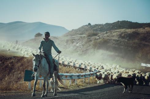 shepherd-4599469_1280
