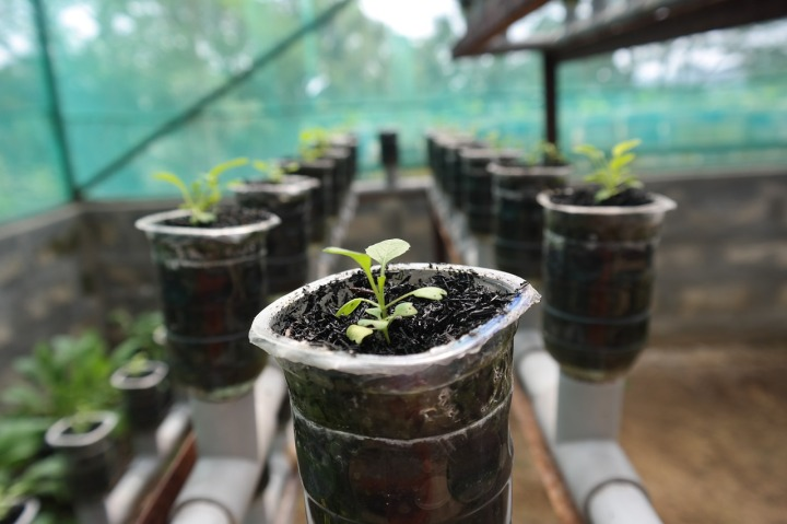 plant-1204662_1280
