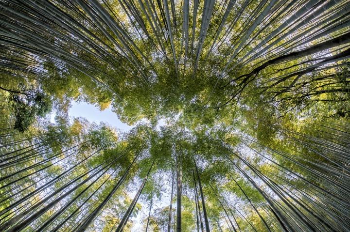 bamboo-1886974_1280